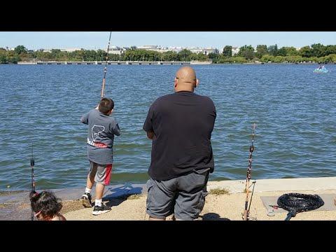 🔴Live Massive Catfish vs Boy: catching catfish from shore