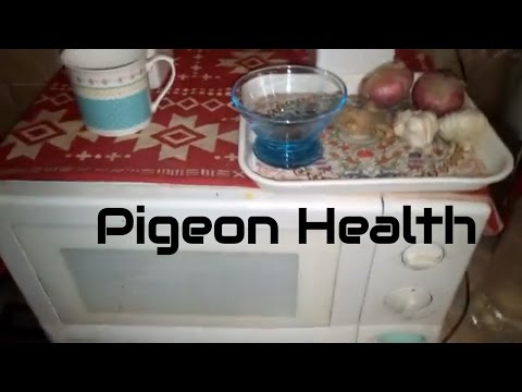 4 Natural products that will keep your pigeons Healthy - Nutritional Recommendations for Pigeons -