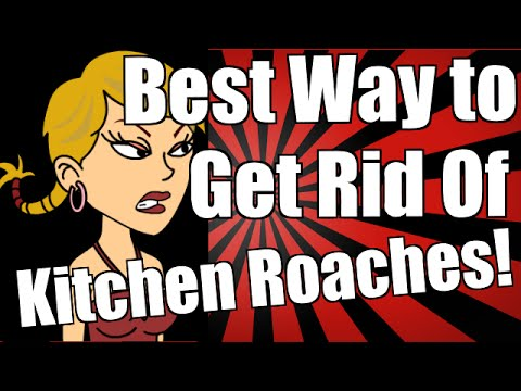 Best Way to Get Rid of Kitchen Roaches