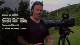 How I film wildlife #1 Ursa Mini with 600mm lens