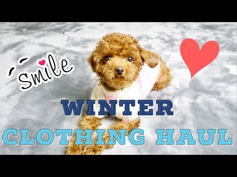 Puppy's First Winter Clothing Mini Haul