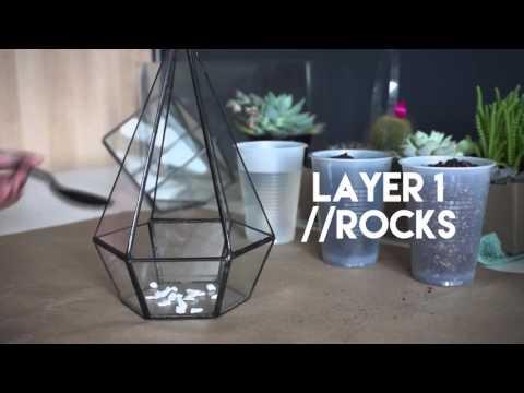 Planting Succulent Geometric Glass Terrarium