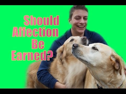 Should your dog earn affection?