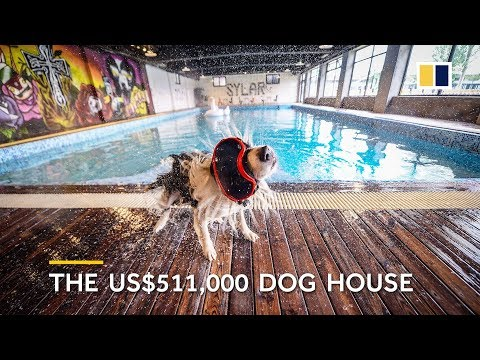Xxx Mp4 Man Builds US 500 000 Mansion For His Dog 3gp Sex