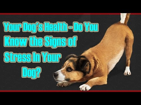 Your Dog's Health - Do You Know the Signs of Stress In Your Dog?