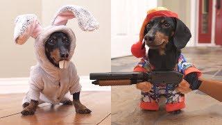 Ep 6. Easter Bunny Wakes Up Grumpy Wiener Dog!
