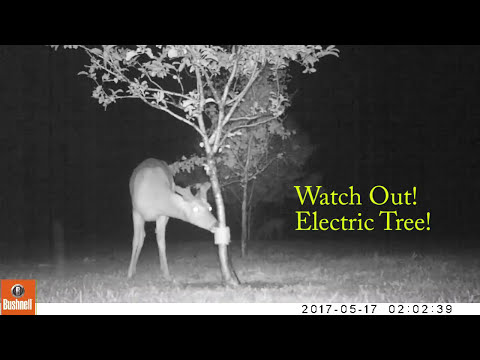 Beware the electric fruit tree :-)