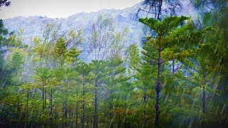 Download Forest Rainstorm Sound for Sleeping or Studying | Rain Sounds White Noise 10 Hours Video