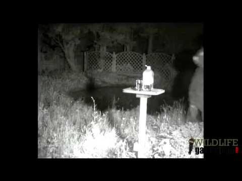 Wildlife Gadget Man - Provide Water For Hedgehogs!