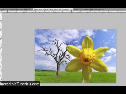 Adobe Photoshop CS3 Tutorial: Quick Selection Tool