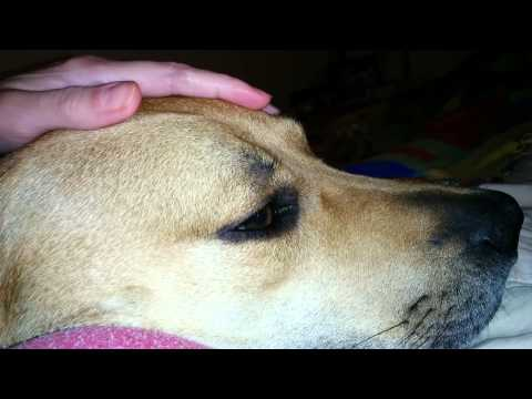 Chevy idiopathic head tremors
