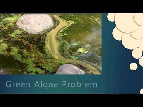 Remove String Algae NBS VITE - Pond Blanke Weed Treatment