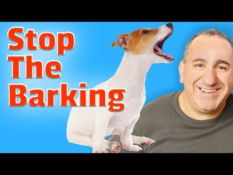 How to get my dog to stop barking - 5 Simple tips