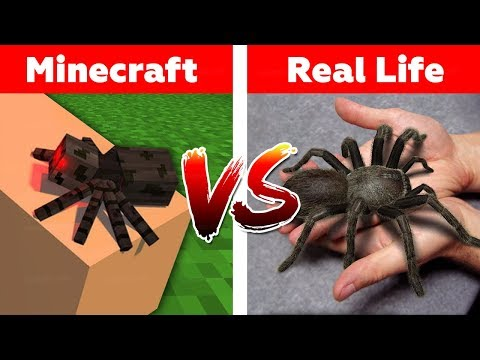 Xxx Mp4 MINECRAFT SPIDER IN REAL LIFE Minecraft Vs Real Life Animation 3gp Sex