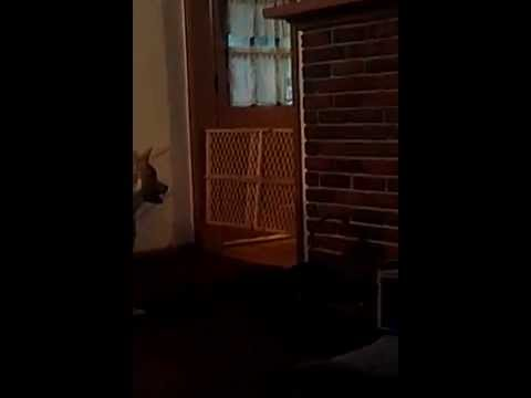 dog jumps over baby gate