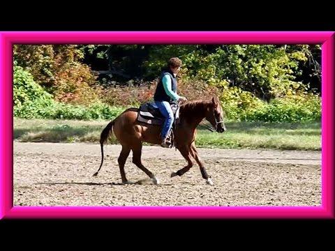 Horse Training Update 10/8/ 2015