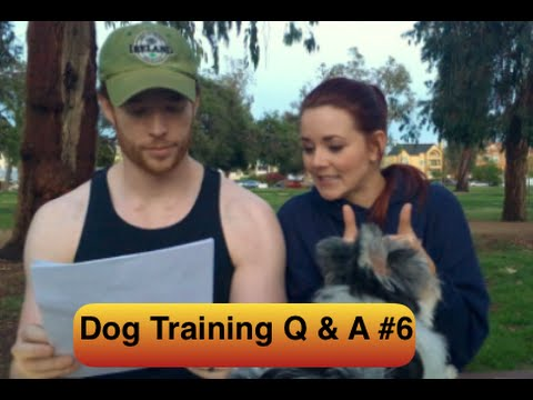 Dog Training Question & Answer #6 -  dog bites feet, whining and barking at night, leash reactive
