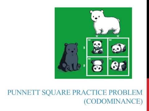 Punnett square practice problems (codominance)