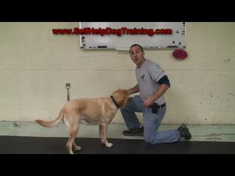 How to Give a Pill to a Dog - Tips from the Dog Training Guys! (k9-1.com)