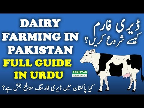 How to Start Dairy, Cattle Farming Business Full Guide Tips & Tricks by Experts & Dr. in Urdu/Hindi
