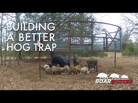 Introducing BoarBuster: A Better Hog Trapping System | Feral Hog Trap