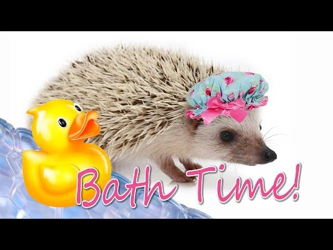 How to Give a Hedgehog a Bath