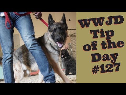 Testimonial, What Would Jeff Do? Dog Training Tip of the Day #127