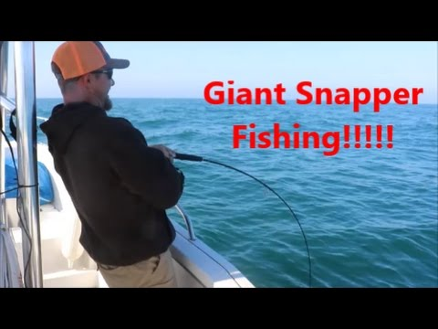 Giant Red Snapper Fishing (Texas)