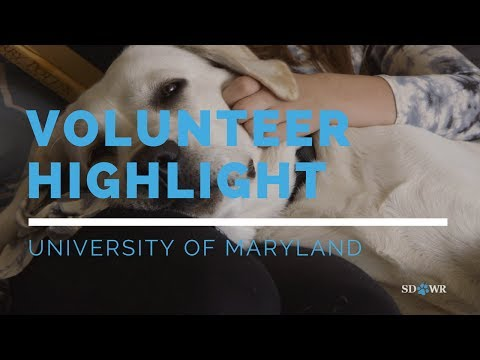 Volunteer Highlight: University of Maryland Service Dog In Training Raisers