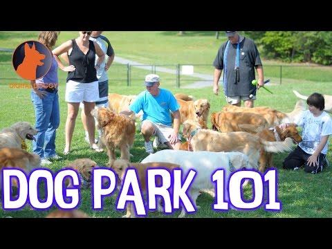 7 Rules of Dog Park Etiquette