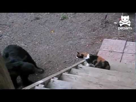 Fearless cat shows bear who's boss