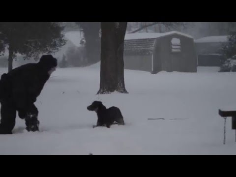 Blizzard of 2016 - Lab Mix