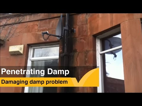 How to Identify penetrating damp