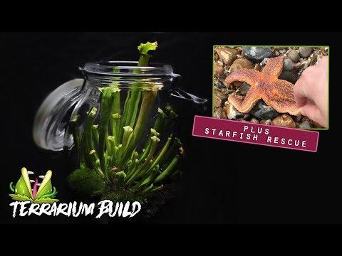 Carnivorous Pitcher Plant Terrarium Build & Saving A Starfish!!