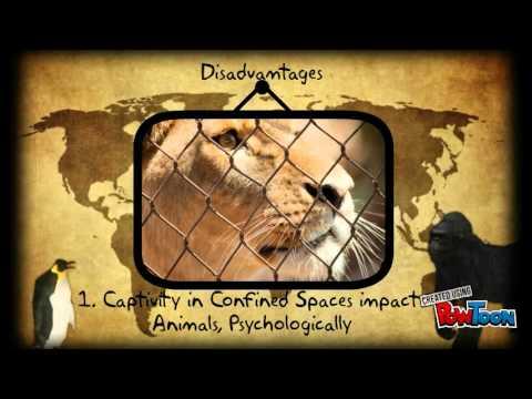 Zoos and their Impact on Biodiversity