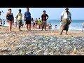 Download  Trincomalee Beach Sri Lanka #fishing MP3,3GP,MP4