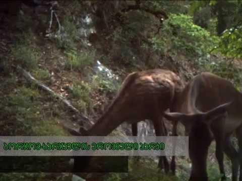 ფოტო ხაფანგის მიერ გადაღებული ცხოველები საქართველოს დაცულ ტერიტორიებზე