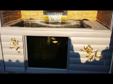 Raised wooden fish pond