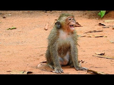DeDe is female too small monkey - Why DeDe scream & Cry Loudly because angry like this? |