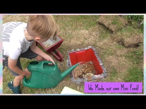 We Made our own Mini Pond!