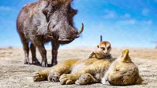 Timon and Pumbaa find Baby Simba Scene - THE LION KING (2019) Movie Clip