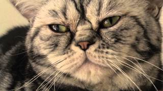 Veľká mačička HD videá