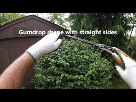 HOW TO: Prepare and Trim shrubs with hand shears