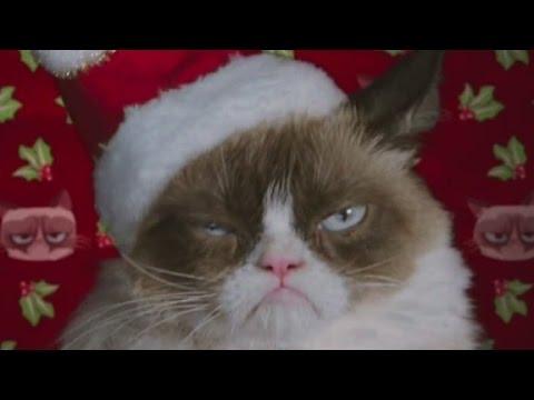 Grumpy Cat starring in Christmas movie