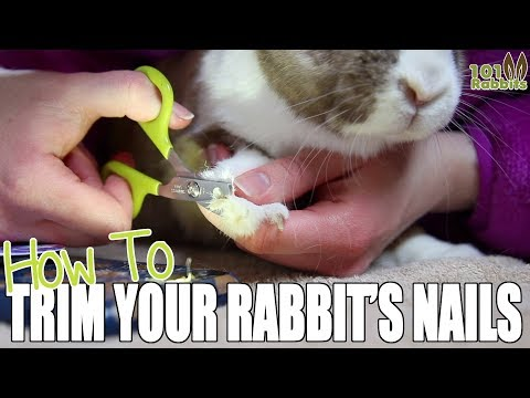 How To Trim a Rabbit's Nails