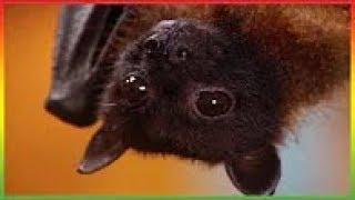 Zoboomafoo 2018 - Flying Buddies - Animal shows for kids - Zoboomafoo Season 2