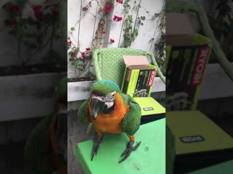 How to build Parrot toys out of wood