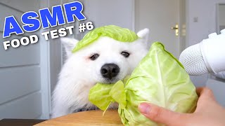 ASMR Dog Reviewing Different Types of Food #6 I MAYASMR