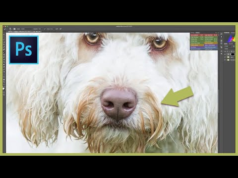 Removing dog tear stains in Photoshop