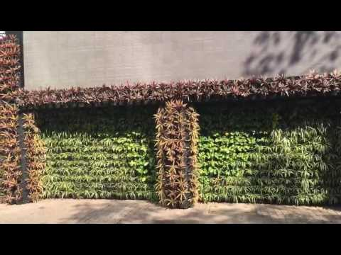 Natural Vertical Wall Grass by Green Wall Nursery, Nashik
